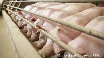Свиноферма в Восточной Германии.