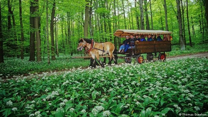 Deutschland Nationalpark Hainich (Bildergalerie)