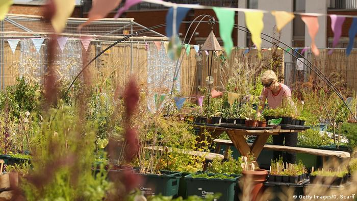 Roof Garden in London