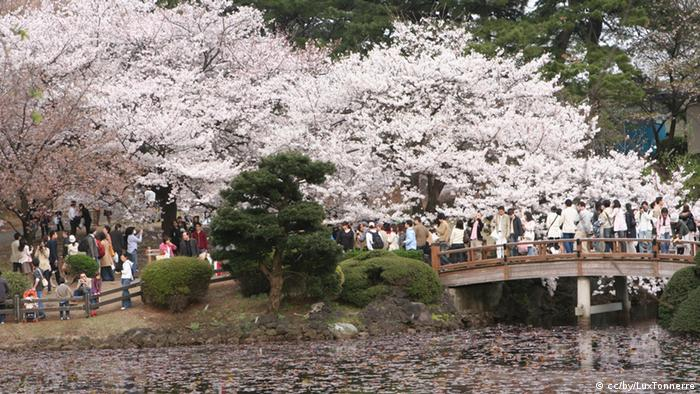 Cherry Blossom Festival (Photo Source: https://www.flickr.com/photos/luxtonnerre/441940789 URL Lizenz: https://creativecommons.org/licenses/by/2.0/ Copyright: CC BY 2.0: LuxTonnerre/flickr)