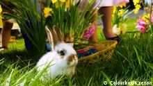 Osterhase mit Blumen und Eierkorb