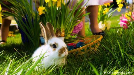Osterhase mit Blumen und Eierkorb (Colourbox/Kzenon)