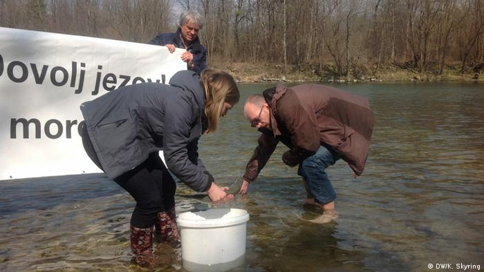 Environmentalists put Huchen into the river (photo: Kerry Skyring)