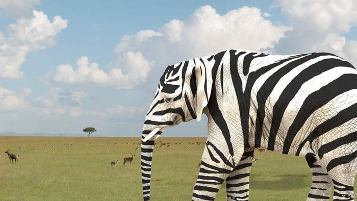 Слон в костюме зебры