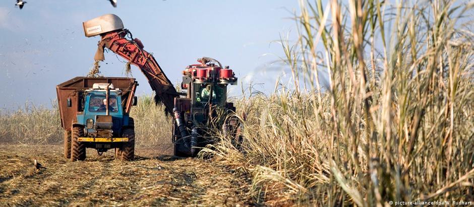 Brasilien - Ernte Zuckerrohr
