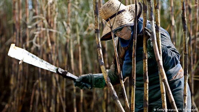Mulher corta cana-de-açúcar em plantação em Guariba, no estado de São Paulo