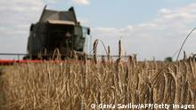 Ukraine Landwirtschaft Weizenernte