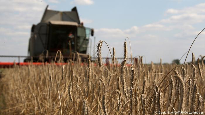 Добрий урожай - одна з причин зміцнення гривні