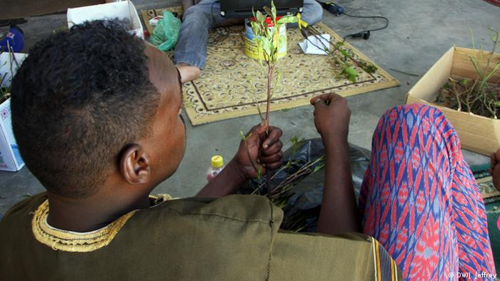 Khat is big business in Ethiopia | Africa | DW | 10 07 2019