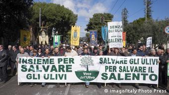 «Σώστε τις ελιές μας, σώστε το Σαλέντο»