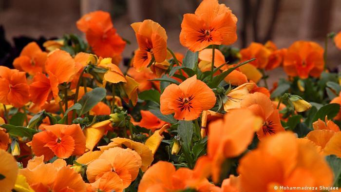 Bildergalerie Blumen Veilchen