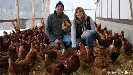 Bauernhof Gut Kappeln Hühner EINSCHRÄNKUNG