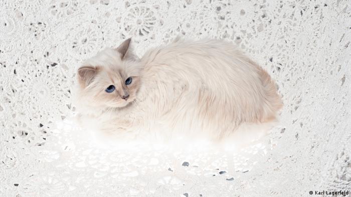 Кошка Карла Лагерфельда по кличке Шуппет
