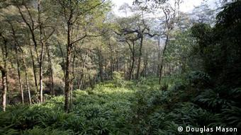 a community forest