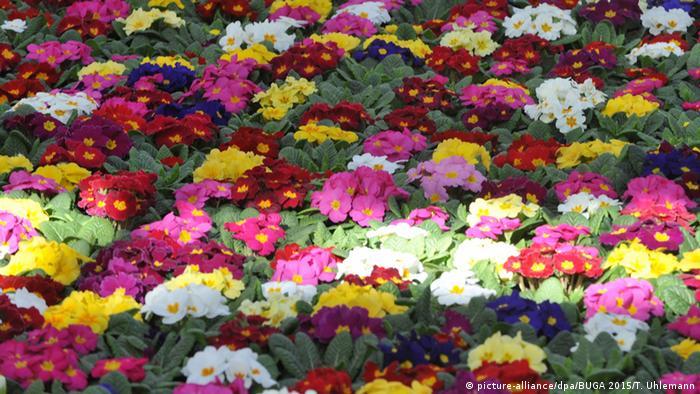 Blumenbeet (Foto: picture alliance/ T. Uhlemann)