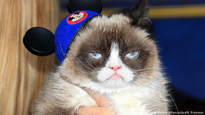 Bildergalerie Berühmte Katzen Grumpy Cat