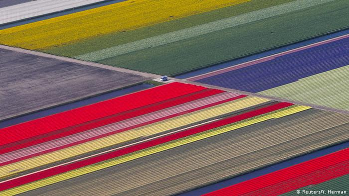 BIG PICTURE Niederlande Blumenfelder