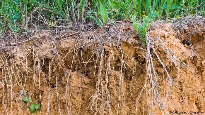 Erdboden mit Gras