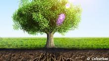 Baum Wurzeln Gras