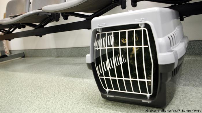 Symbolbild - Katze beim Tierarzt