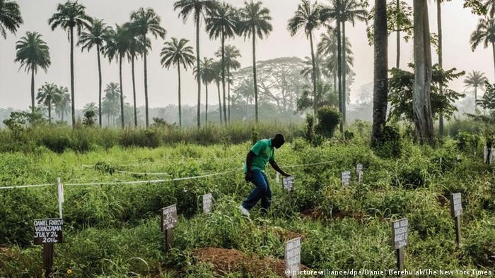 Pulitzer-Preis für Fotografie: Gräber von Ebola-Toten in Liberia (Foto: dpa)