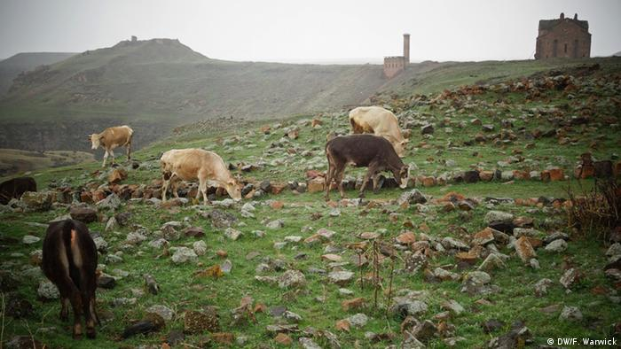 Cows graze near the Minuchihr mosque