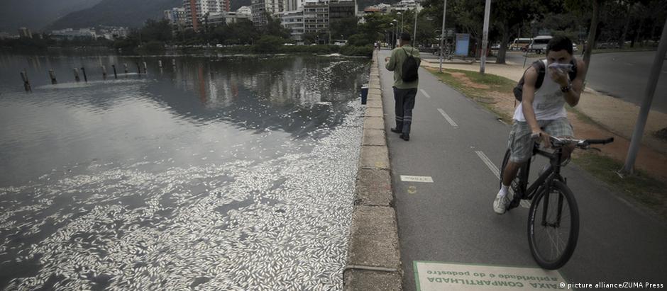 Mortandades de peixes são fenômeno crônico na Lagoa Rodrigo de Freitas