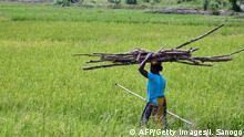 Frau auf einem Reisfeld, Elfenbeinküste