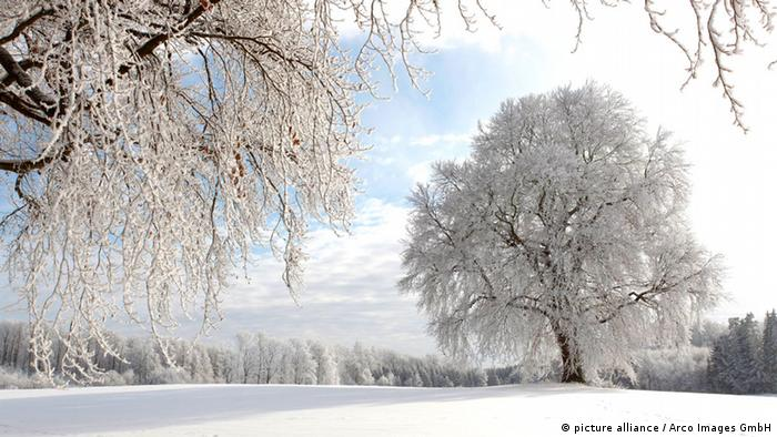 Winter (iarna)  18399861_303