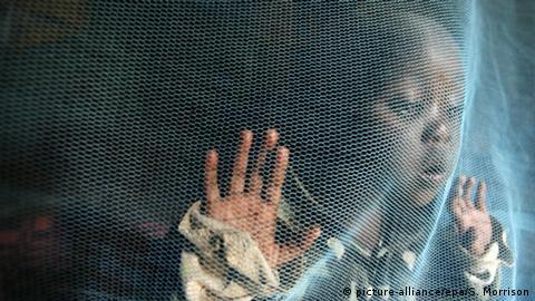 situation ebola en guinée