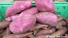 Titel Foto 3: Süßkartoffeln von Ivan Sulog Bildbeschreibung: Rote und orangene Süßkartoffeln von Ivan Sulog Rechte: Aufgenommen von N. Tomasovic, DW-Korrespondentin Aufnahmedatum: April 2015 Aufnahmeort: Kroatien