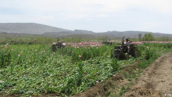 Pakistan Kampf gegen dem Opium