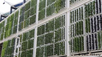 Vertical farming on the facade of a building