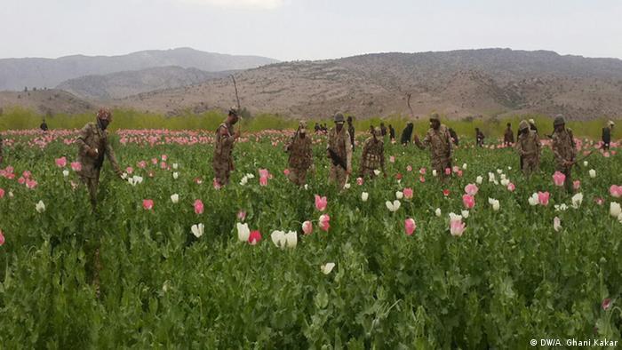 Bildergalerie Pakistan Kampf gegen Opium
