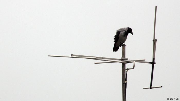 Птица, кацнала на антена на фона на мрачно небе