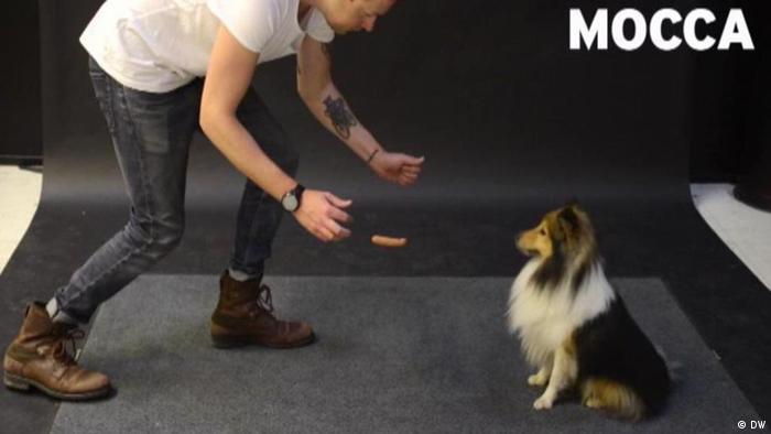 A man approaches a dog (DW)