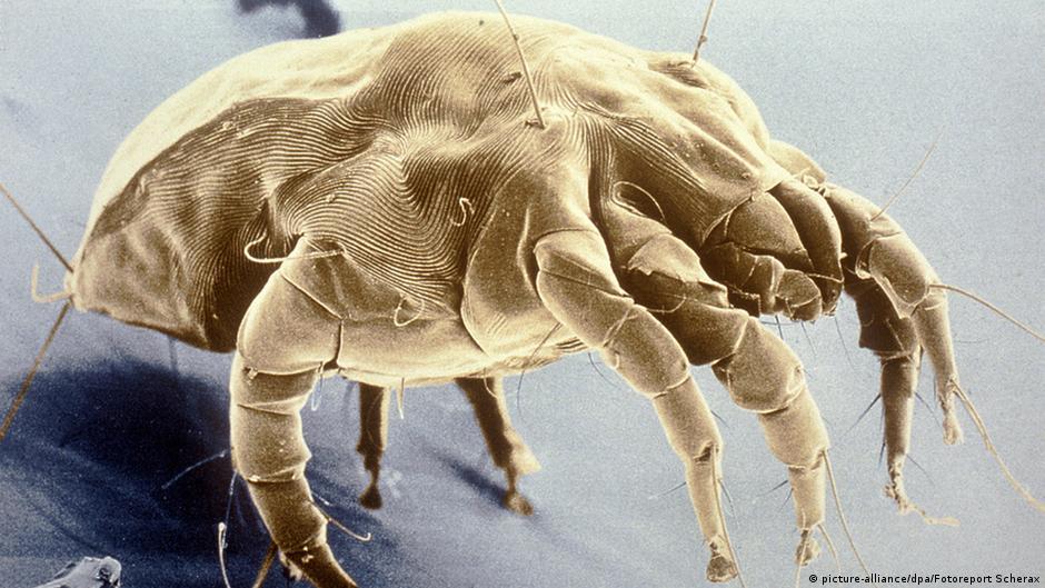 Аллергия на сперму проходит ли сама