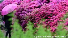Bild des Tages Rhododendronbusch