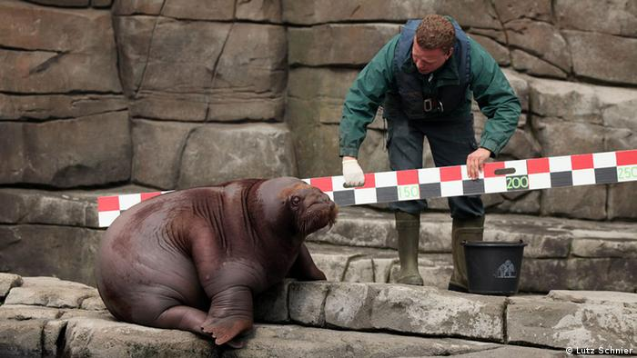 How to measure a walrus | All media content | DW | 11 05 2015