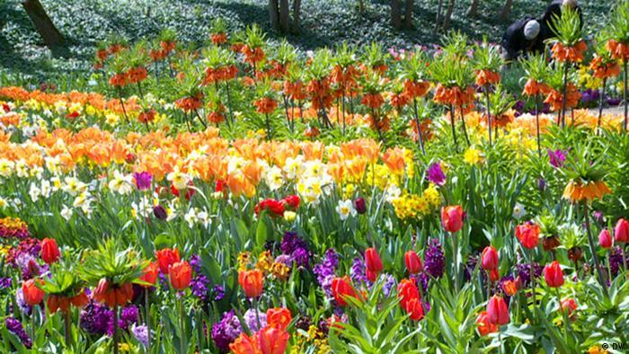 Blumenbeet (Foto: DW)