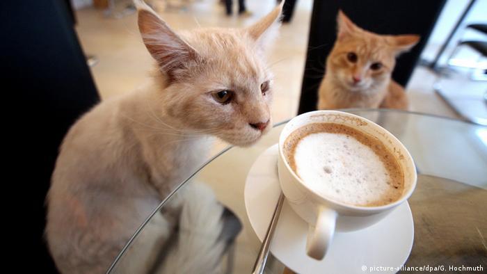 Кошка с чашкой кофе