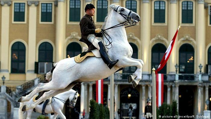 Лошадь липпицианской породы