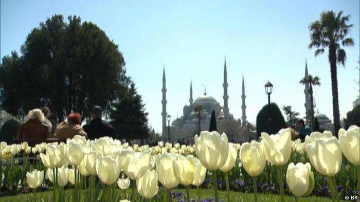 Тюльпаны в Стамбуле