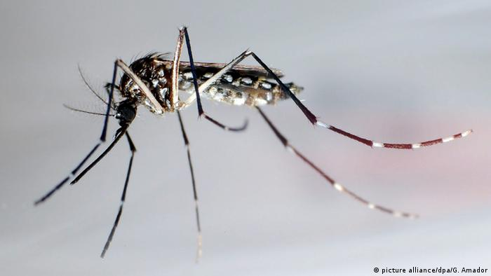 Dengue: a closer look at a spreading fever | Science| In-depth