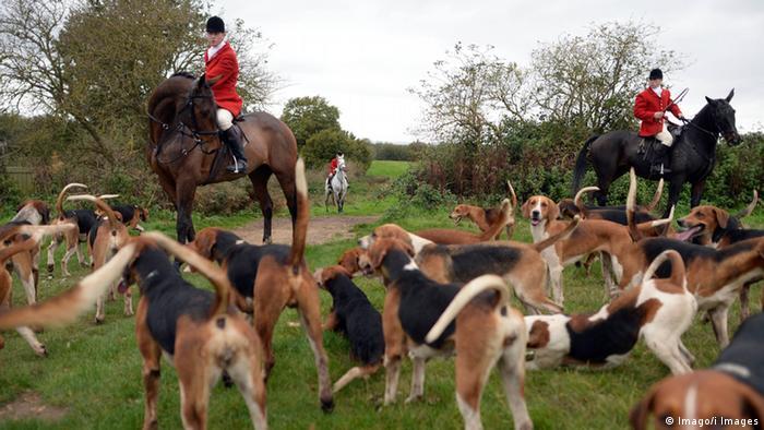 Fuchsjagd in England