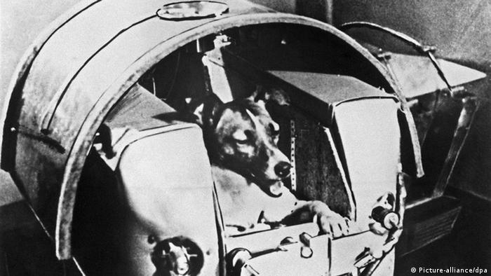 Звезды в мире животных: космонавт Лайка