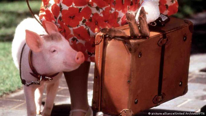 Ein Schweinchen namens Babe (picture-alliance/United Archives/IFTN)