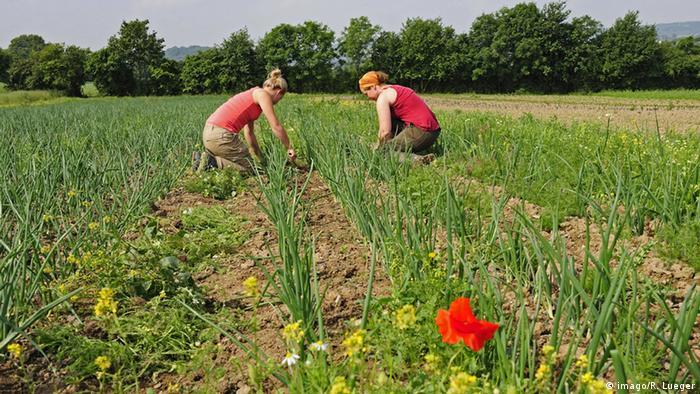 Women planting on organic farm