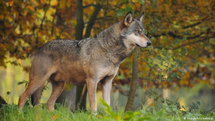 Bildergalerie Artenvielfalt Deutschland