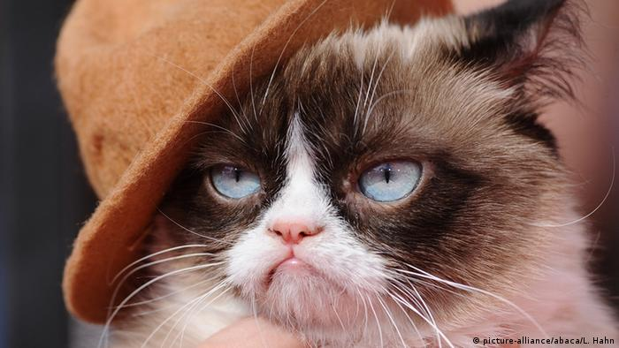 Grumpy Cat (picture-alliance/abaca/L. Hahn)
